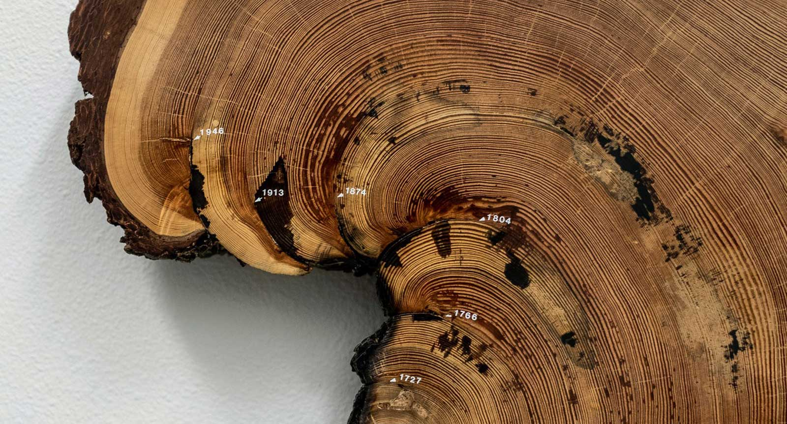 Industry News - Chronicles of the Rings: What Trees Tell Us